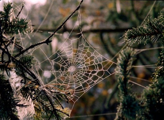 weird christmas traditions christmas tree spider webs woman and home. Black Bedroom Furniture Sets. Home Design Ideas