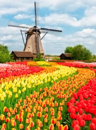 Charlie Dimmock To Join Our New Spring Tour Of Holland's Dazzling Tulip Fields